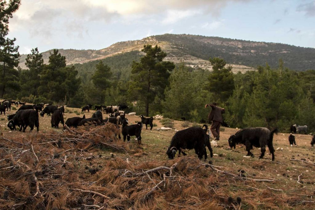 Mobile pastoralists' traditional way of life provides solutions to wildfires